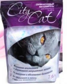 CITY CAT (Lucky Cat)